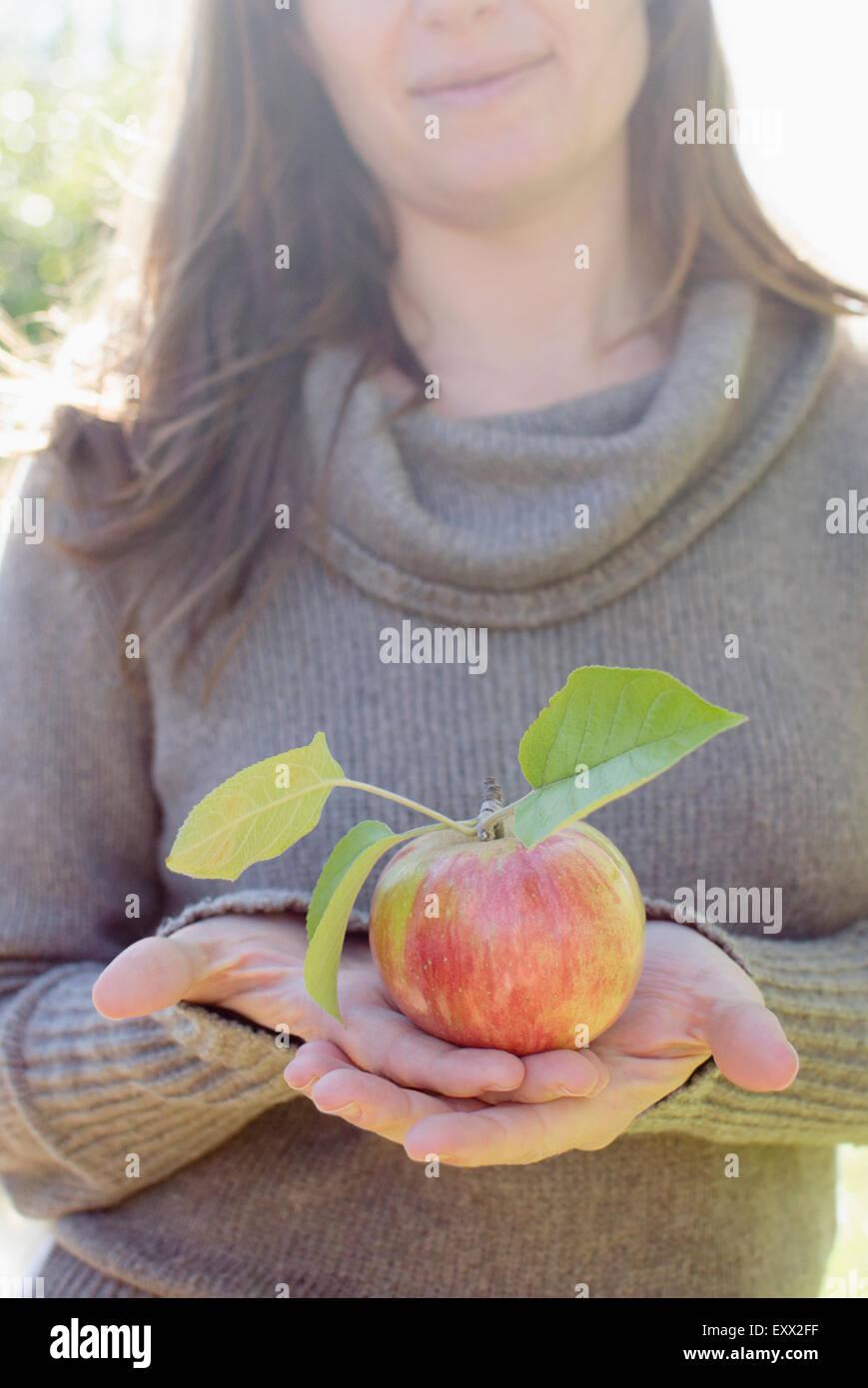 Femme hand holding apple fraîchement cueillies Photo Stock