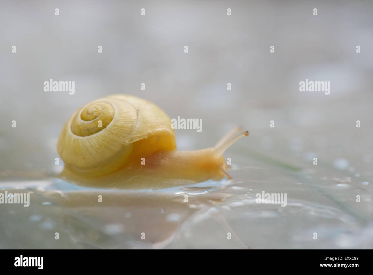 Escargot, gros plan Banque D'Images
