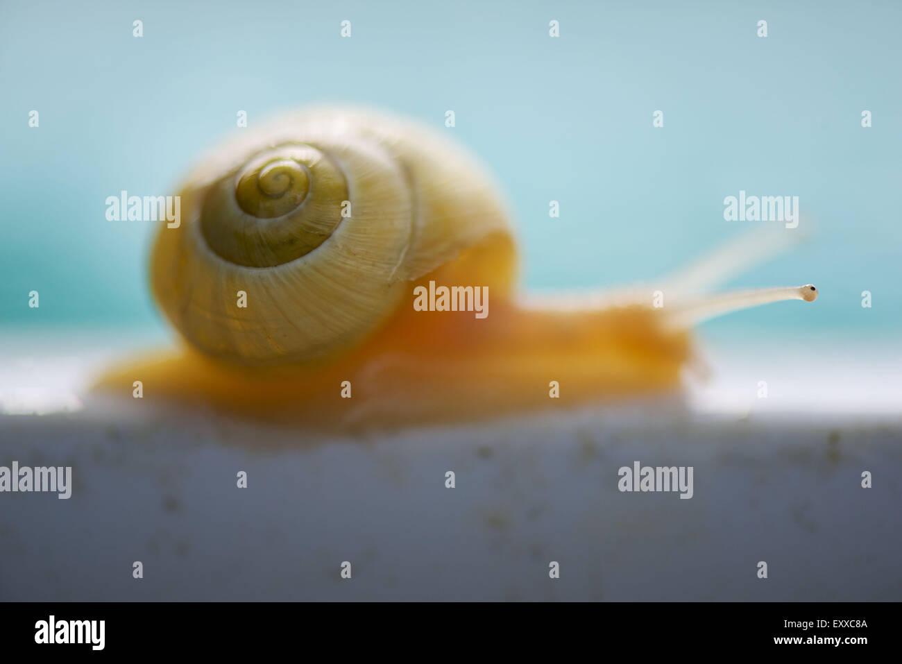 Close-up de l'interpréteur de commandes de l'escargot Banque D'Images