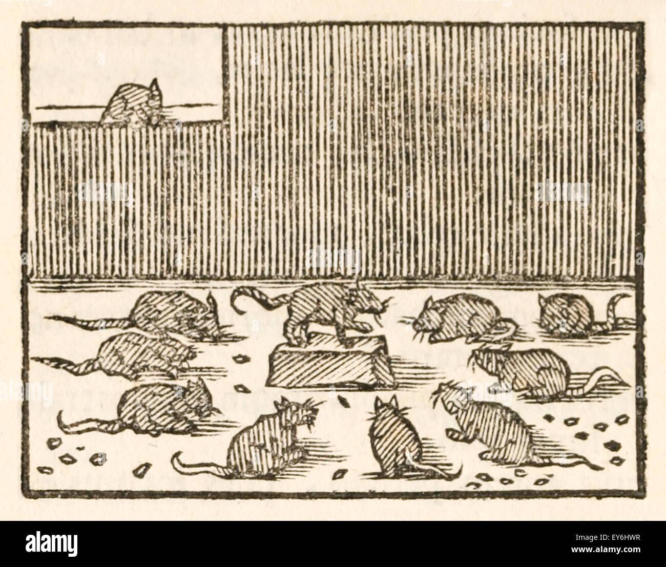 Beaucoup de grenouilles datant