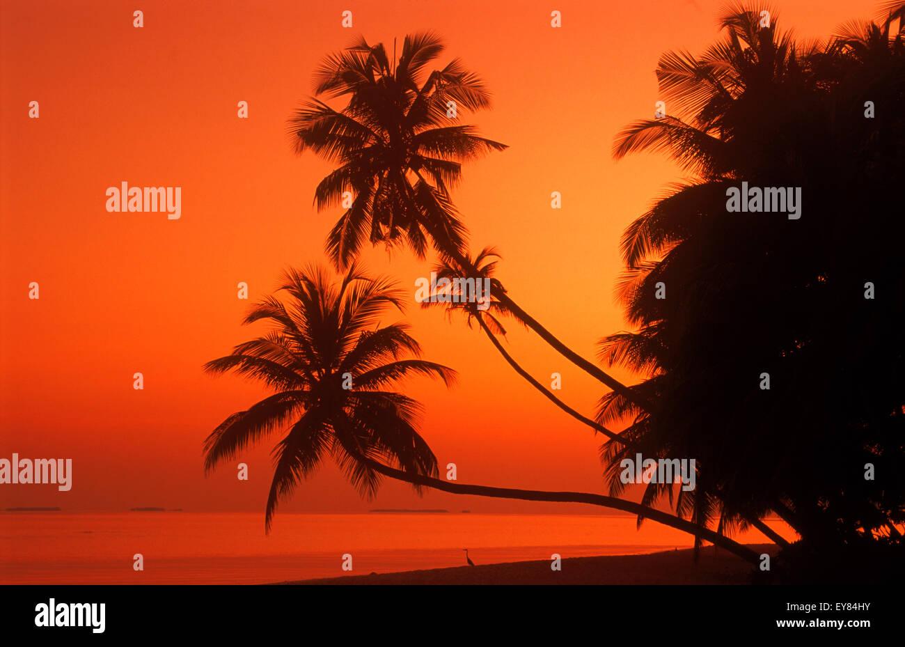 Palmiers sur la rive avec calme et heron bateau passant à l'aube en Maldives Photo Stock