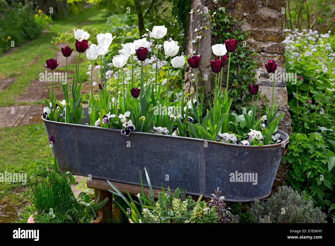 Que Faire Avec Une Vieille Baignoire vieille baignoire avec fleurs de printemps banque d'images, photo