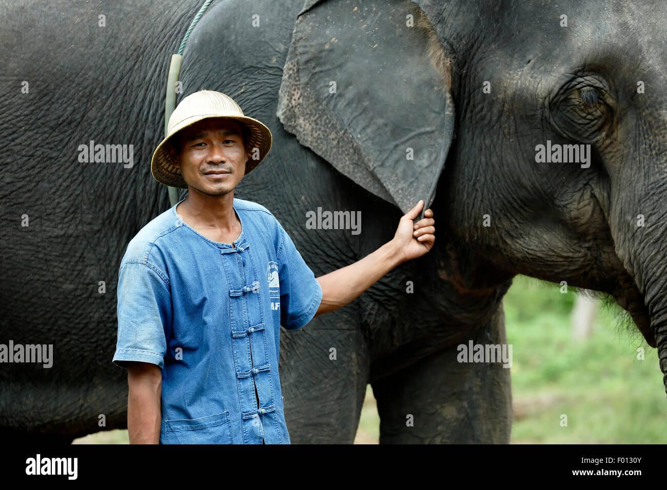 Mahout et de l'éléphant d'Asie (Elephas maximus), thai elephant elephant home farm, keudchang Photo Stock