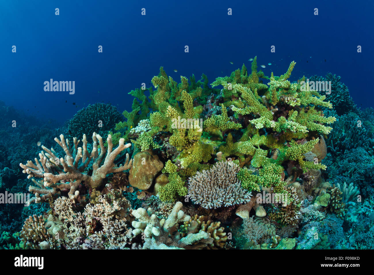 Récif de corail dur, lagon de Marovo, Îles Salomon Photo Stock