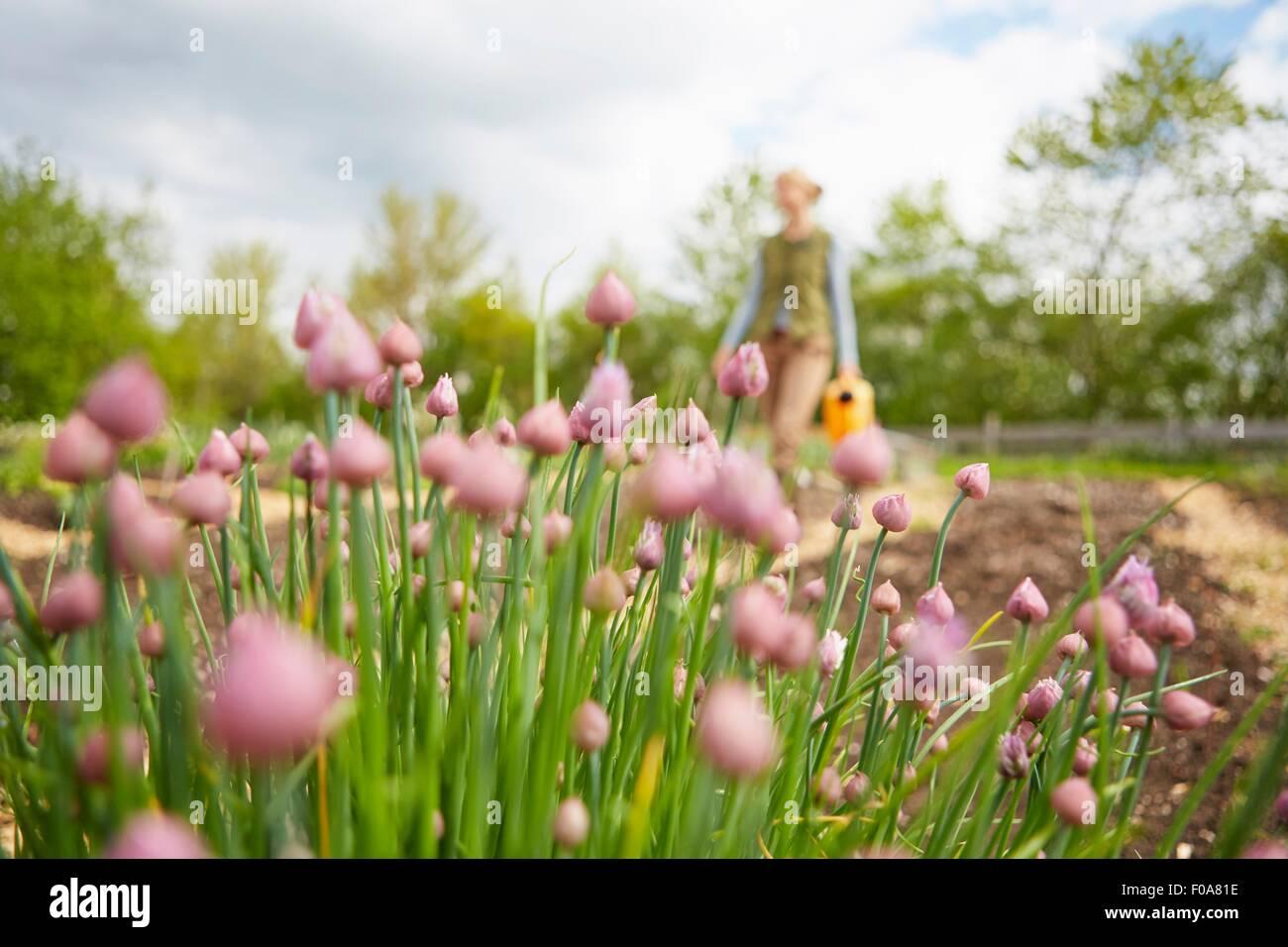 Femme mature, en plein air, jardinage, exerçant son arrosoir, l'accent sur les fleurs Photo Stock