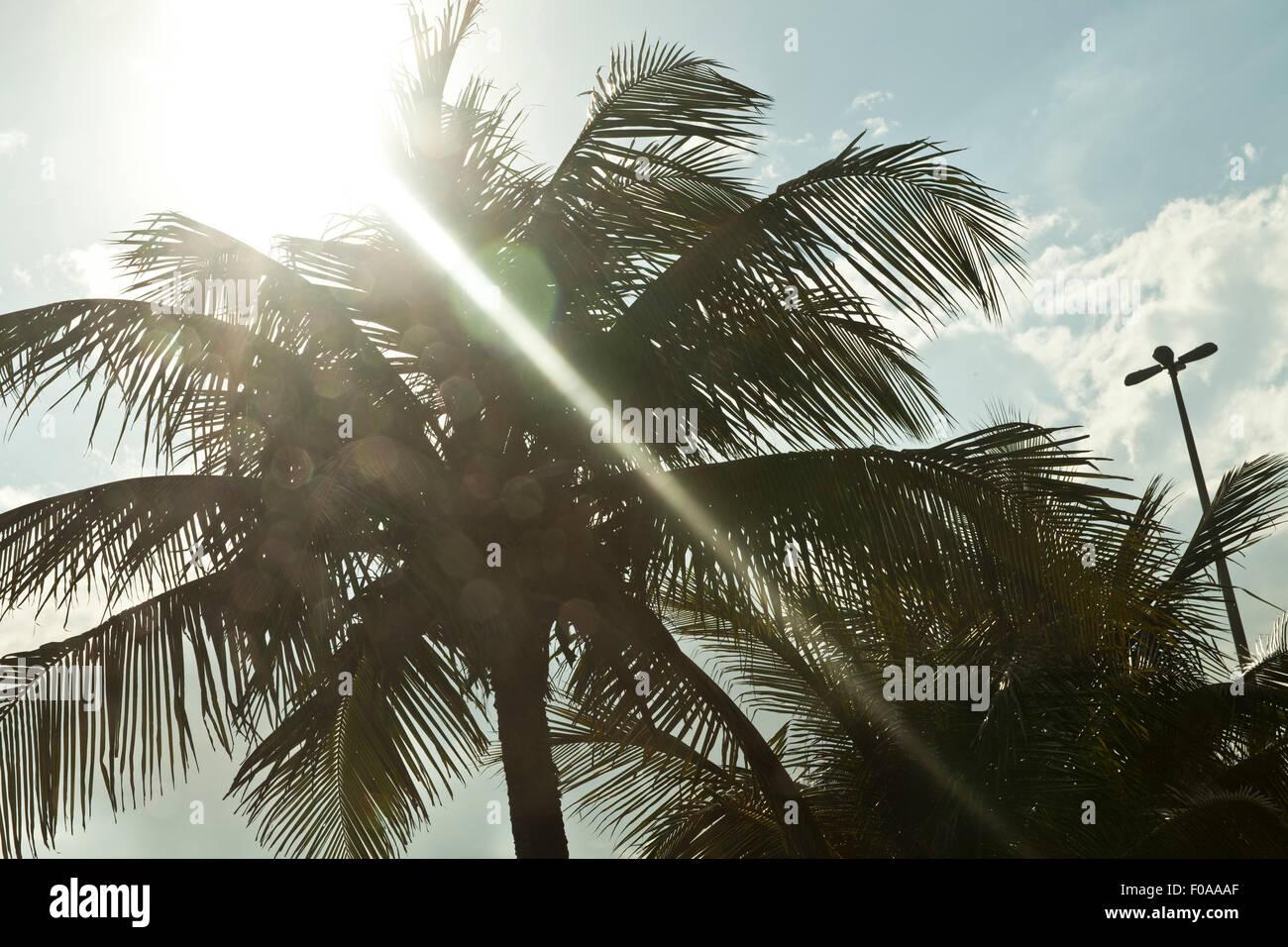 Palmiers et soleil, Rio de Janeiro, Brésil Photo Stock