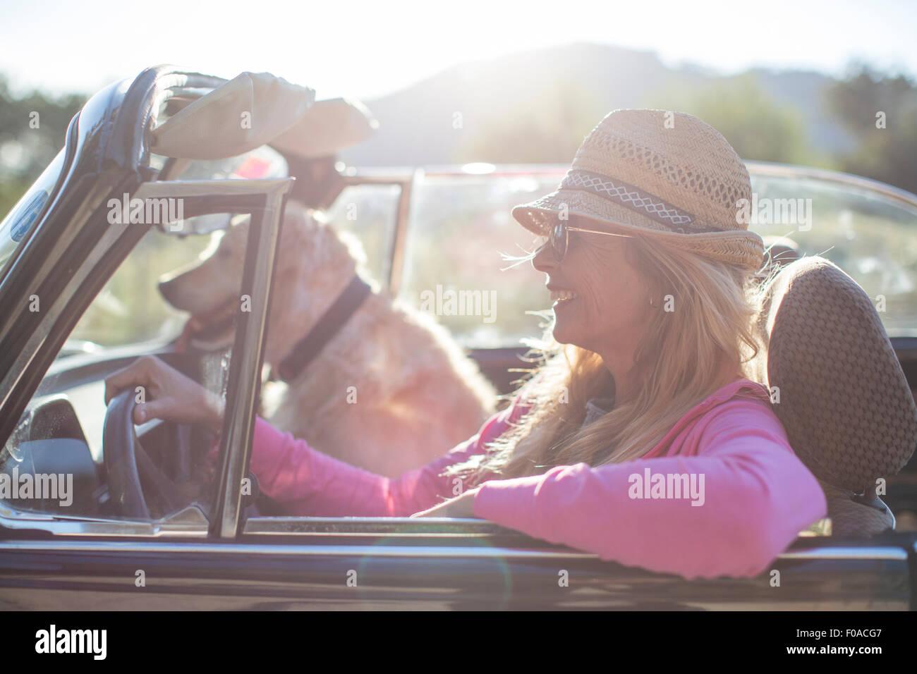 Femme mature et chien, en voiture décapotable Photo Stock