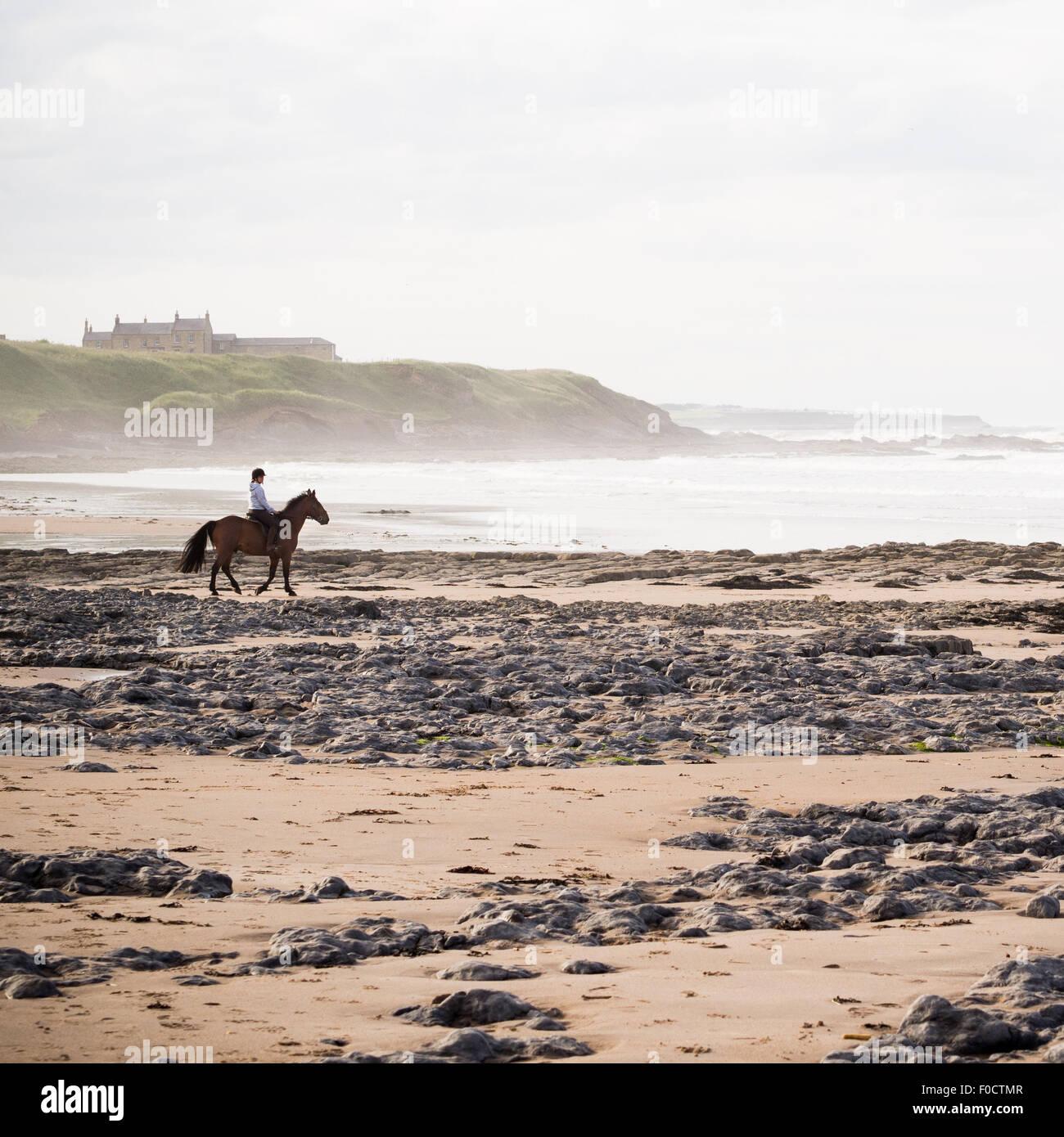 Cheval sur une plage misty Banque D'Images