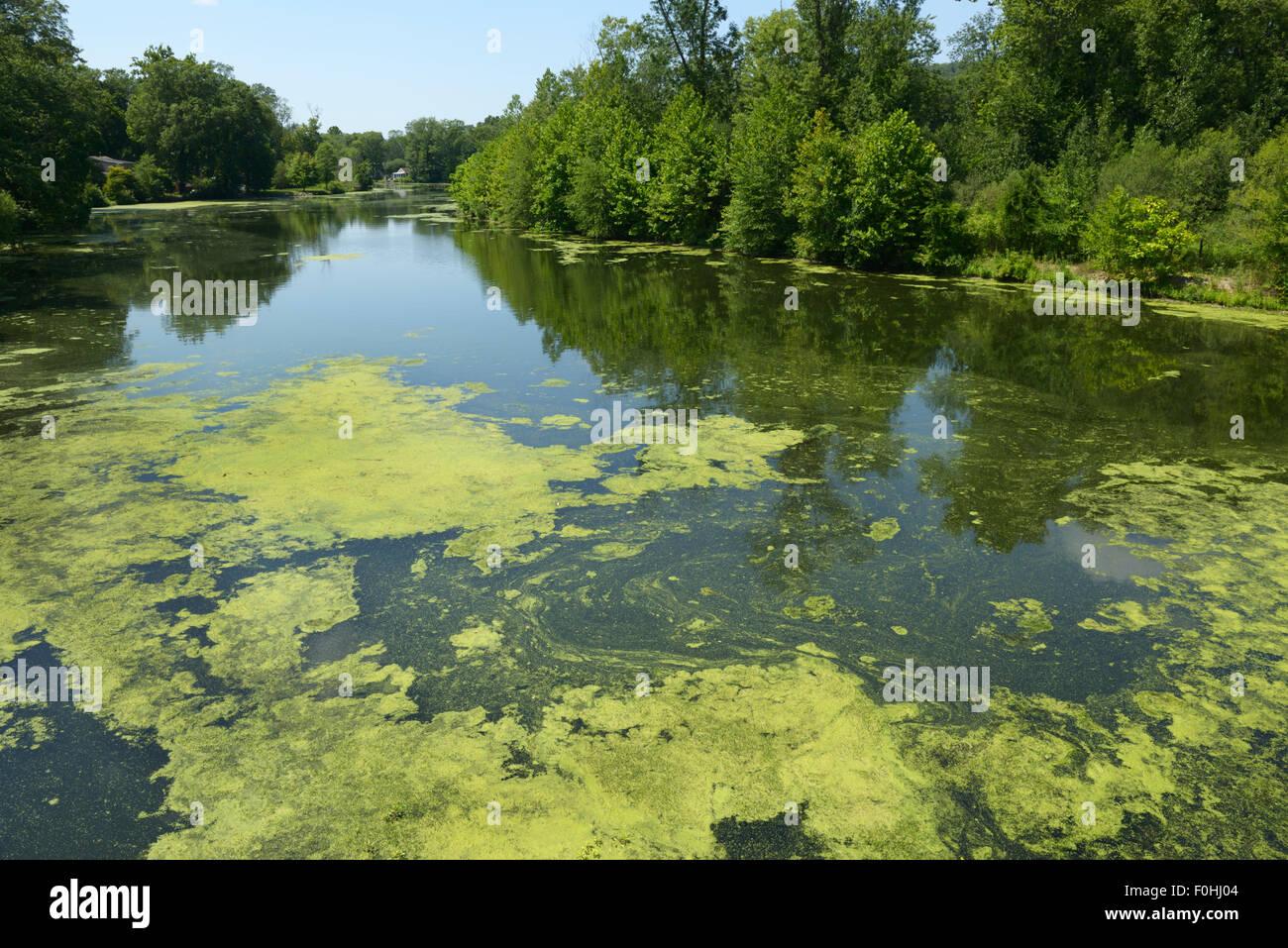 Algues résultant de l'eutrophisation, la rivière Ramapo, nord de la pollution de l'eau (New Jersey). Photo Stock