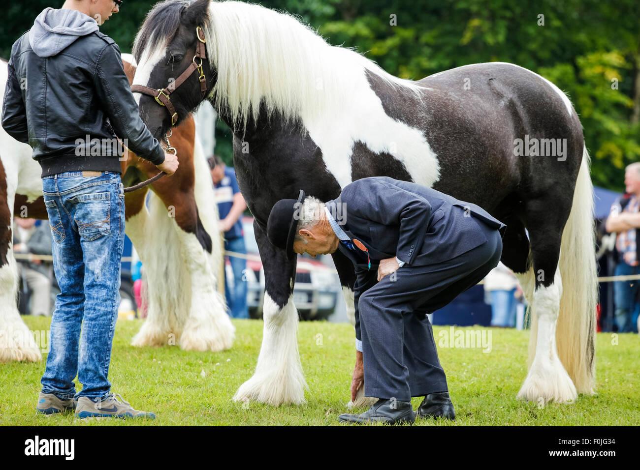 Un juge examine les chevaux hoof au Native et races traditionnelles Show, Ulster Folk Museum, Holywood, Irlande Photo Stock