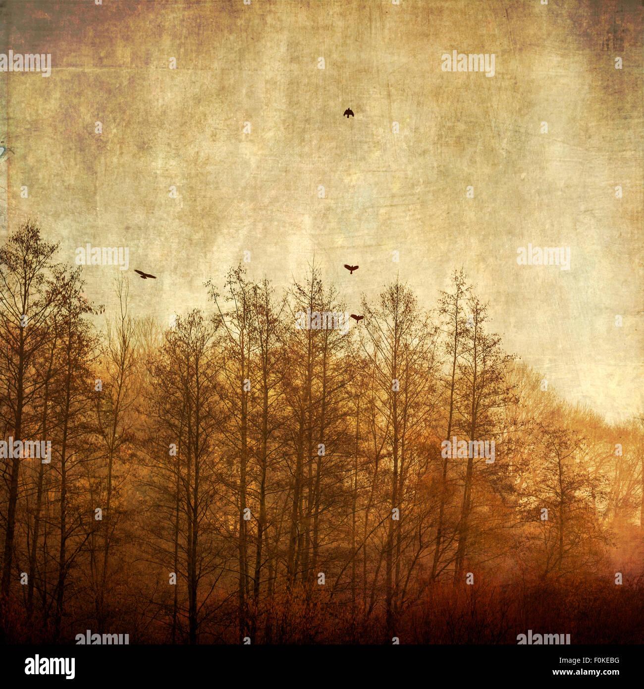 Les arbres et les oiseaux qui volent dans la lumière du matin, effet de texture Photo Stock
