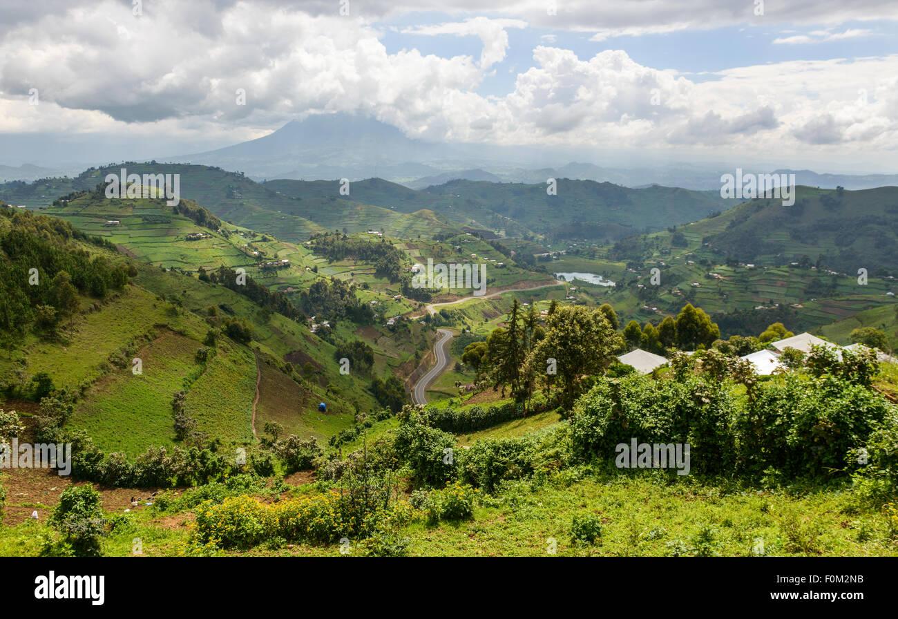 Les montagnes des Virunga, l'Ouganda, l'Afrique Photo Stock
