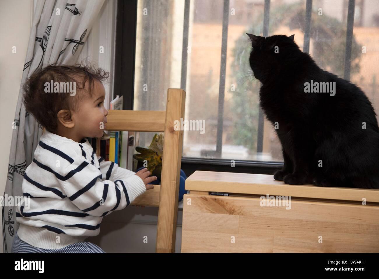 Portrait of female toddler regarder cat on windowsill Photo Stock