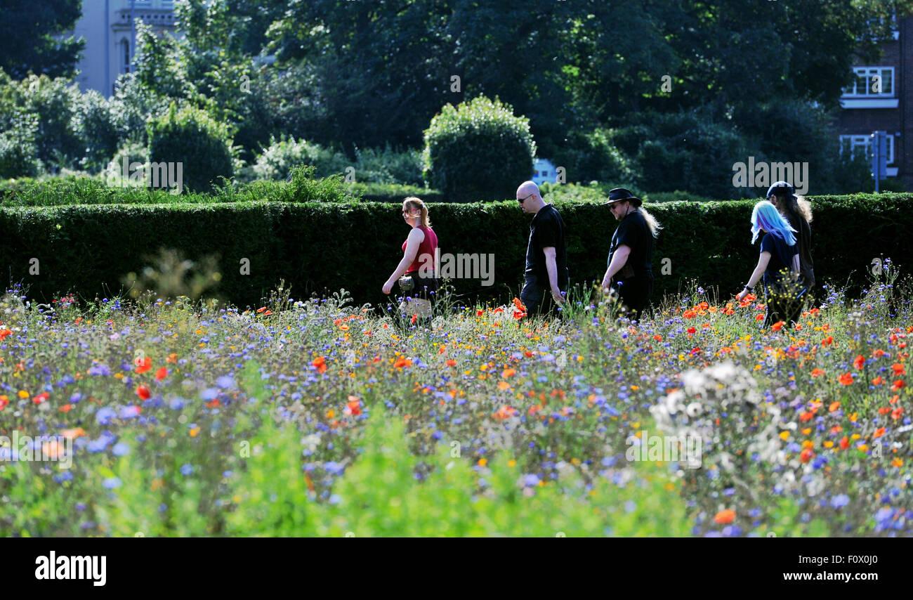 Brighton, UK. Le 22 août, 2015. Les visiteurs apprécient le temps chaud dans the Wild Flower Meadow dans Brighton Banque D'Images