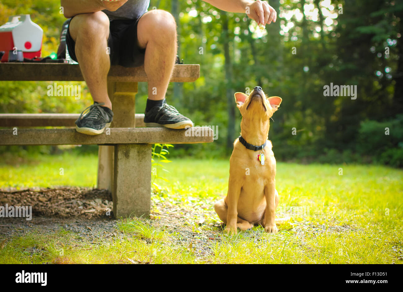 L'alimentation de l'homme à son chien Photo Stock
