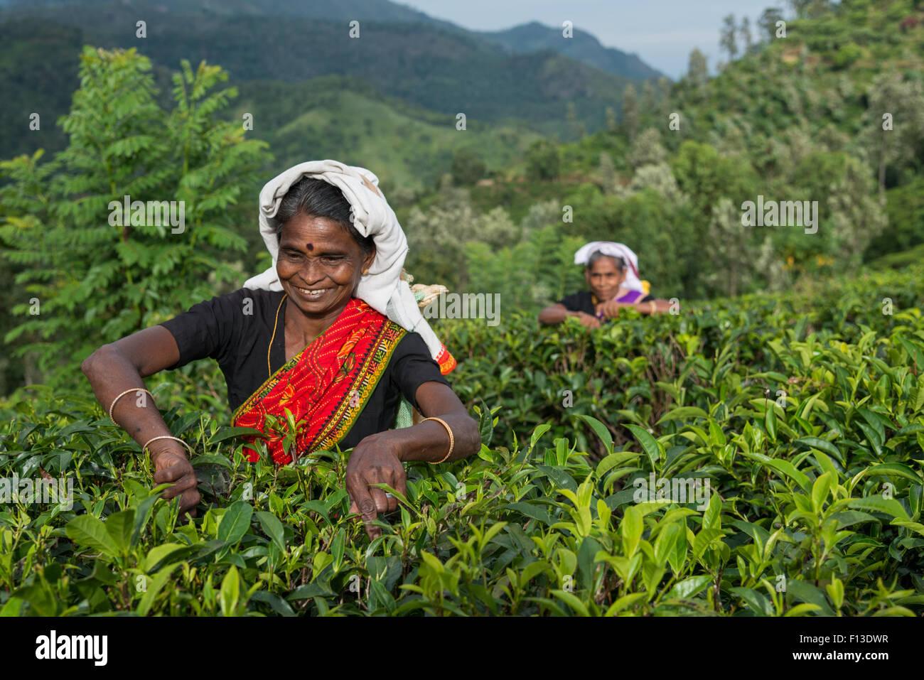 Deux femmes prendre le thé, Sri Lanka Photo Stock