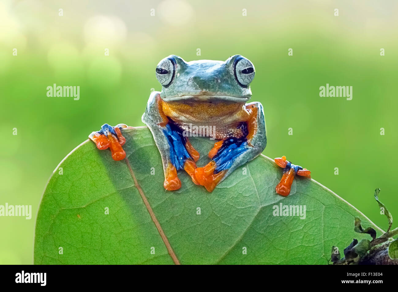 Frog sitting on a leaf Photo Stock