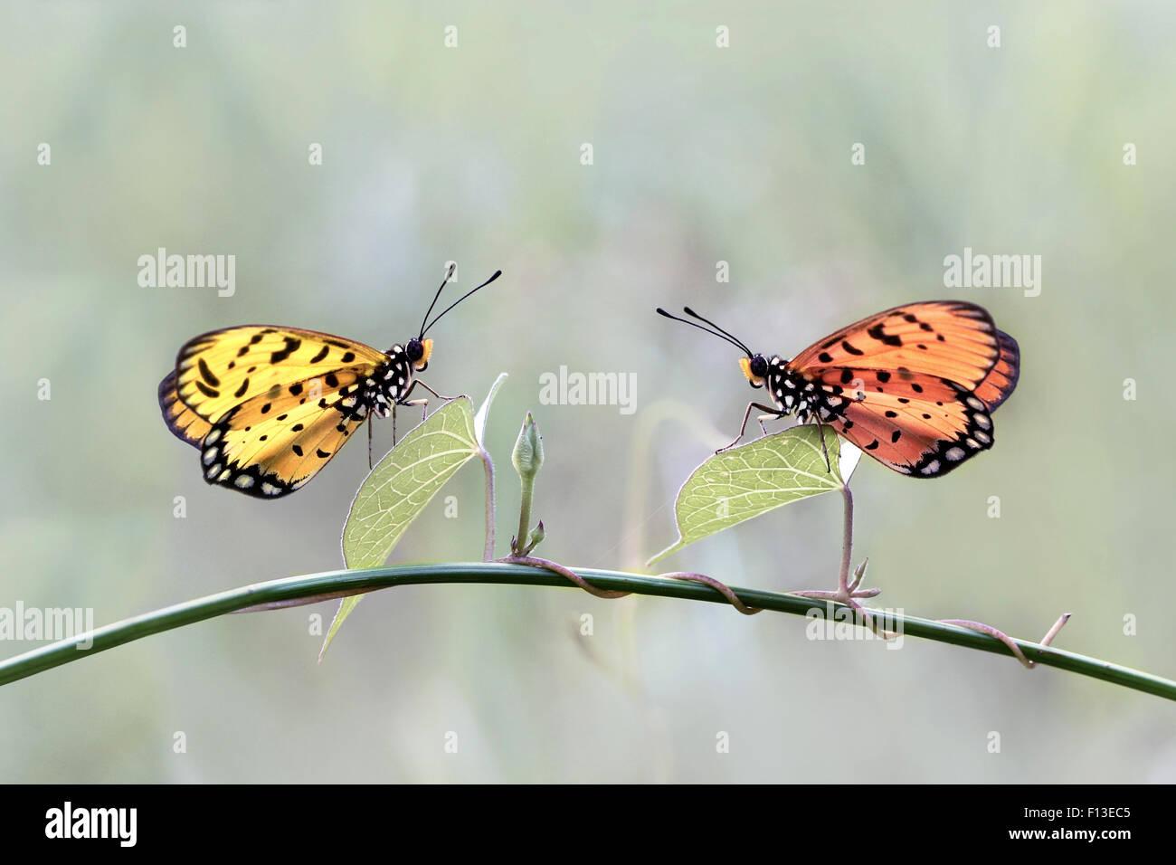 Deux papillons sur une plante Photo Stock