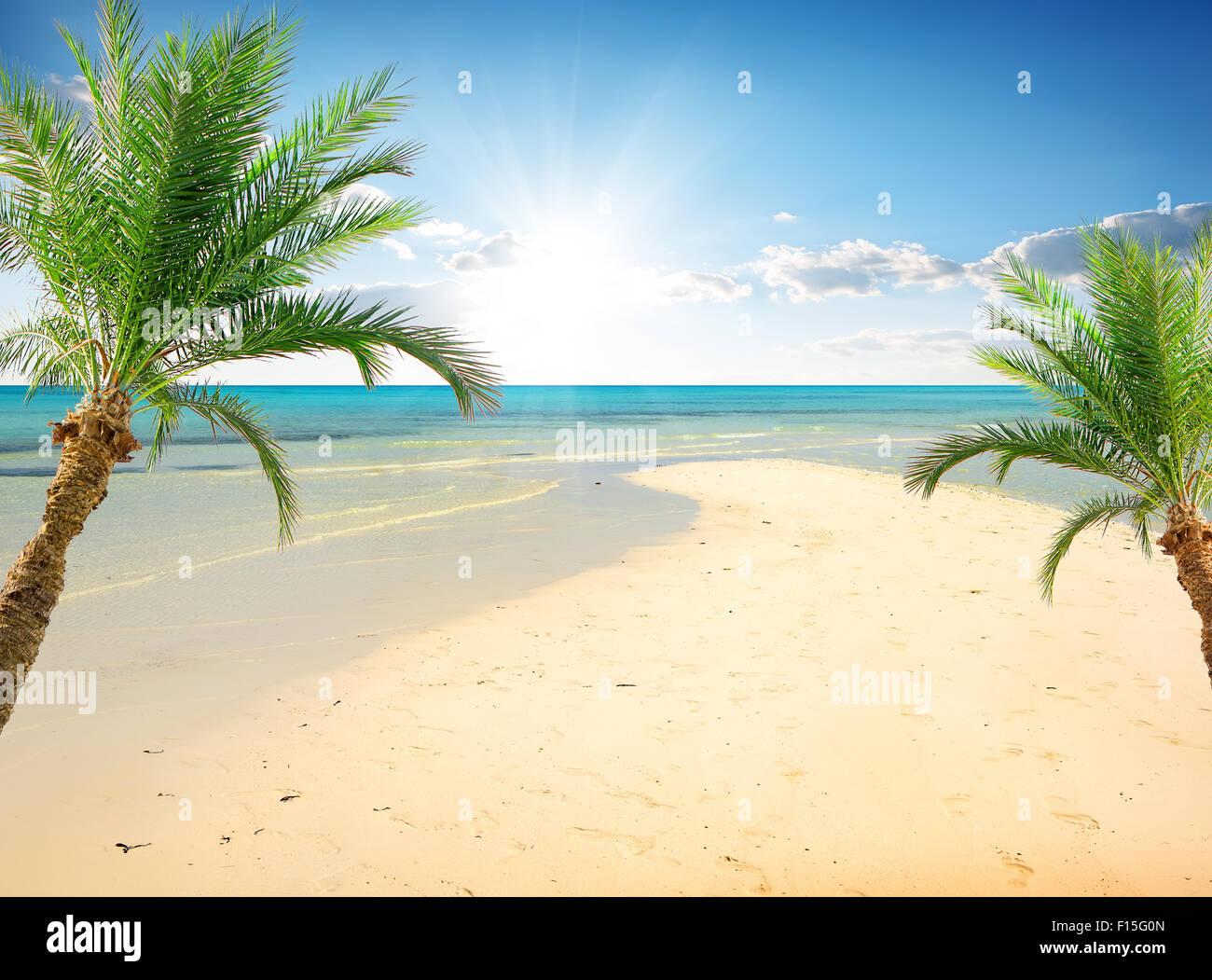 Palmiers sur la plage, près de la mer à sunny day Photo Stock