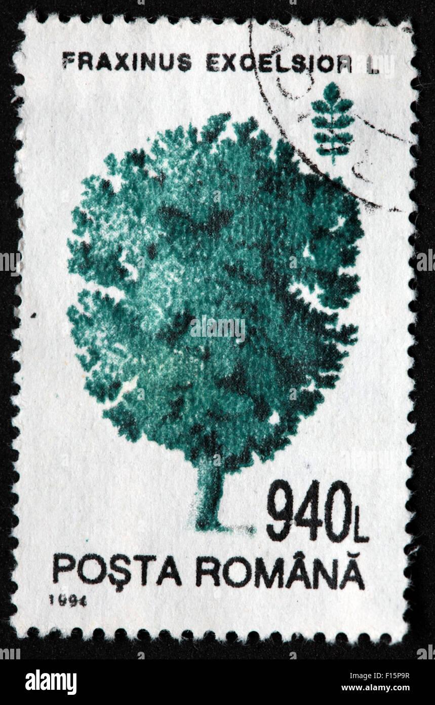 1994 Posta Romana tree 940G Fraxinus excelsior L pin Stamp Banque D'Images
