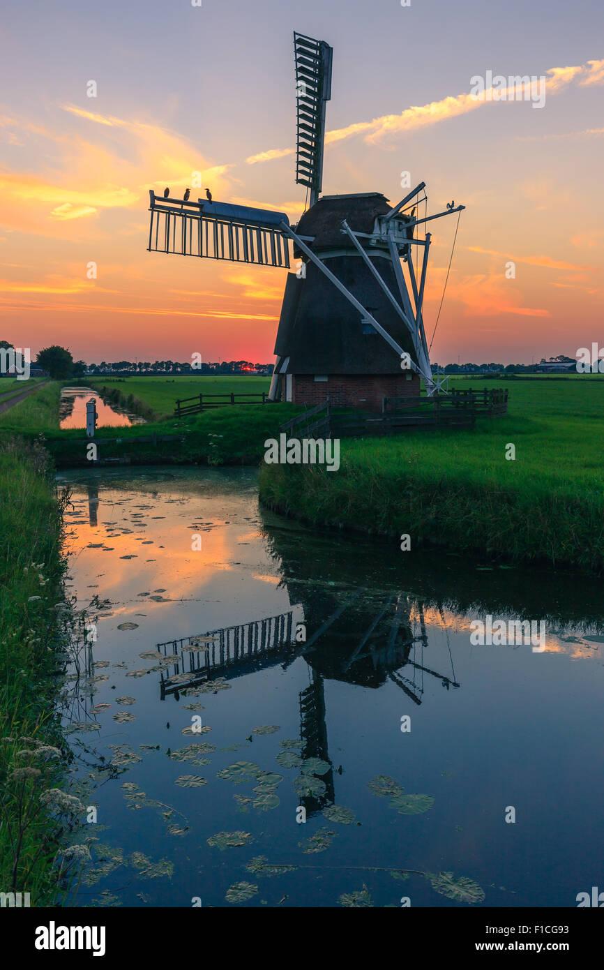 L'agneau blanc Moulin à Zuidwolde, juste à l'extérieur de Groningen, Pays-Bas. Banque D'Images