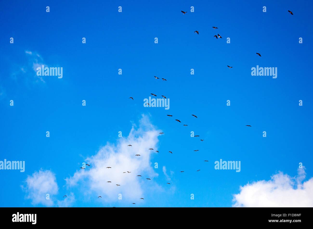 Fond de Ciel. Les nuages et les oiseaux du ciel, l'arrière-plan. Photo Stock