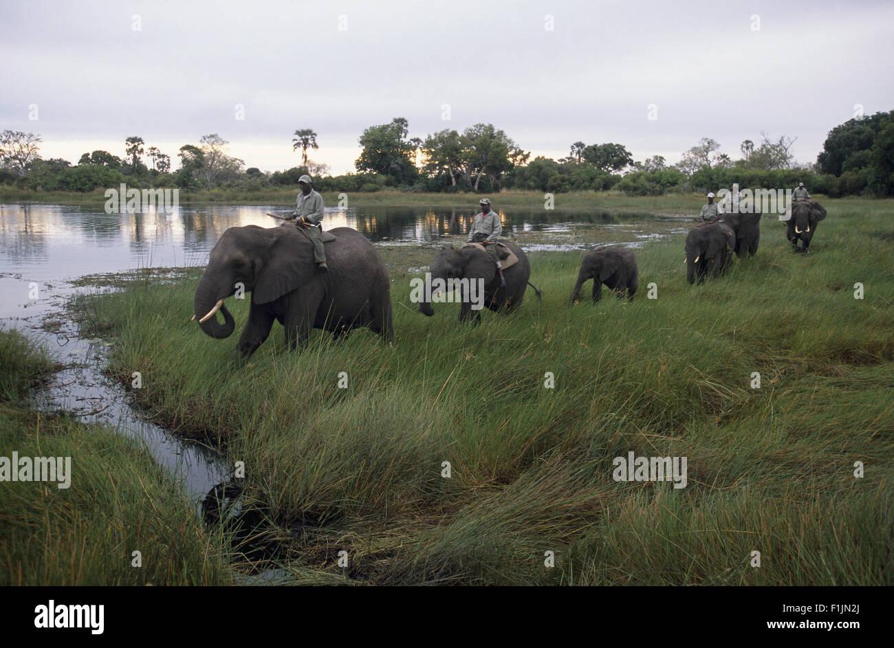 Éléphants safari, Singita, Zimbabwe Photo Stock