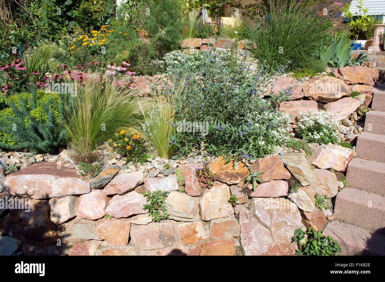 trockenmauer ; fuenf ; steingarten, monate nach bepflanzung banque d