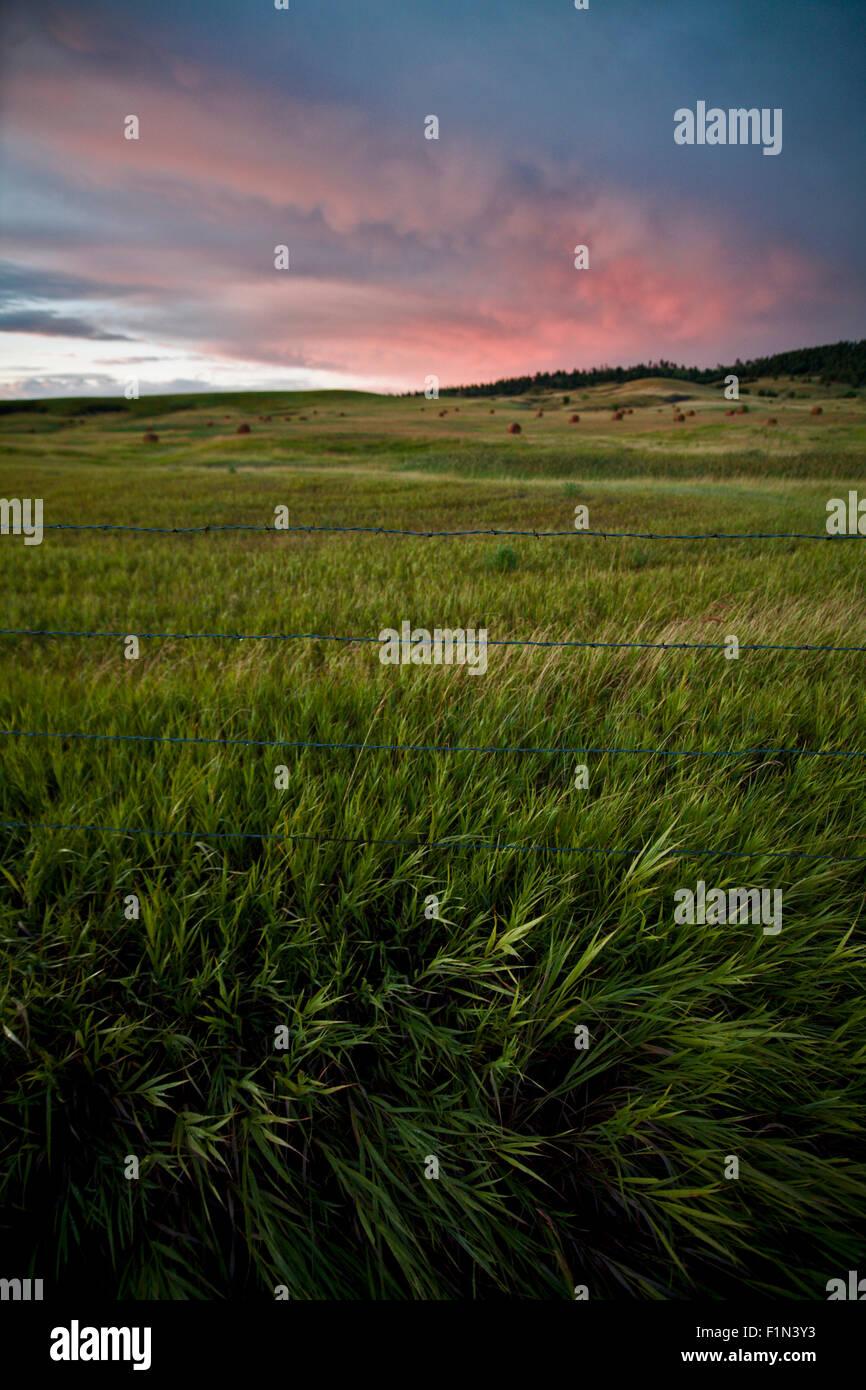 La recherche à travers un champ d'herbes se balançant dans un jeu avec un joli coucher de soleil sur Photo Stock