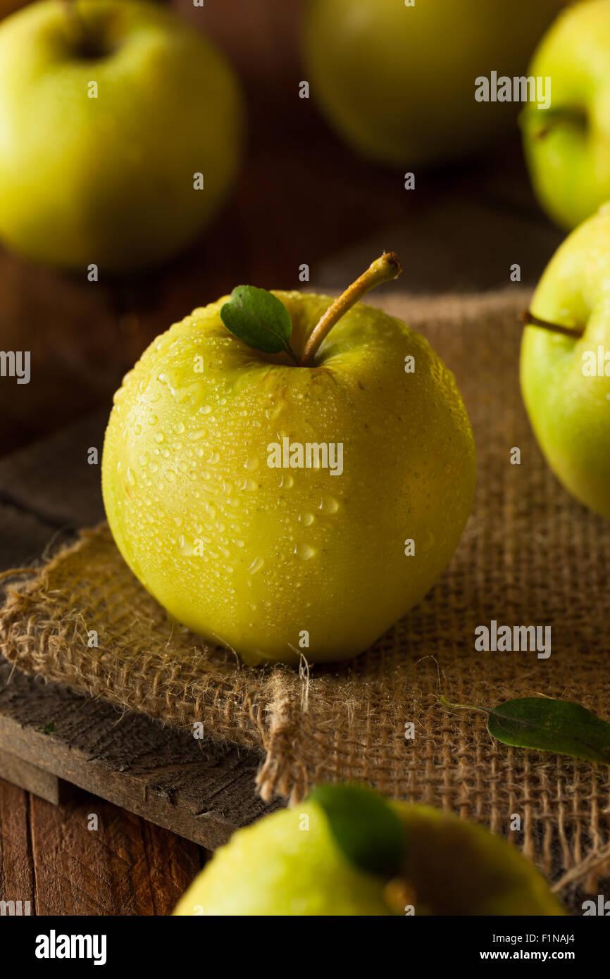 Pommes Golden Delicious biologiques crus prêt à manger Photo Stock