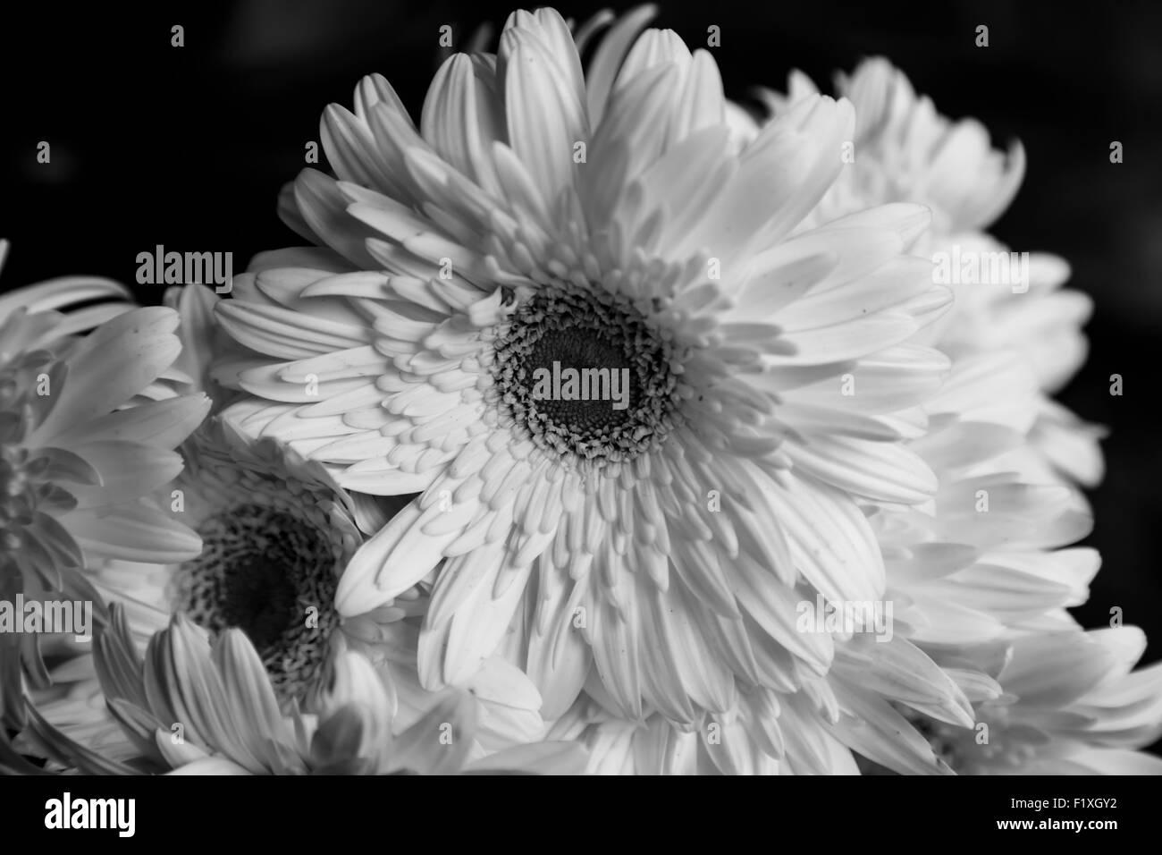 B/W white flower closeup détail Photo Stock