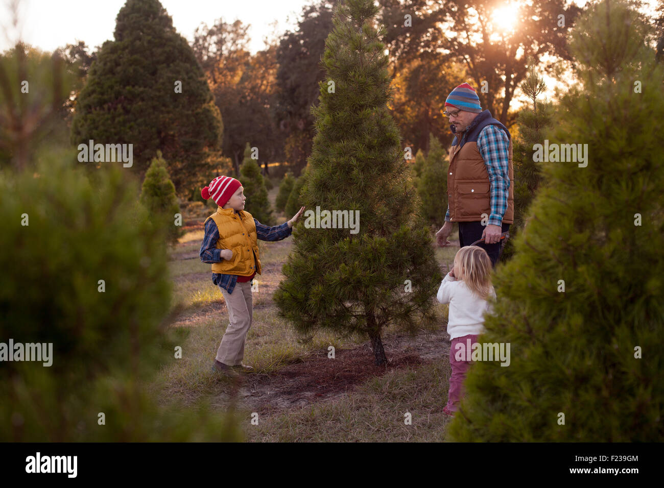 Une famille de décider quel arbre de Noël à couper à une ferme forestière. Photo Stock