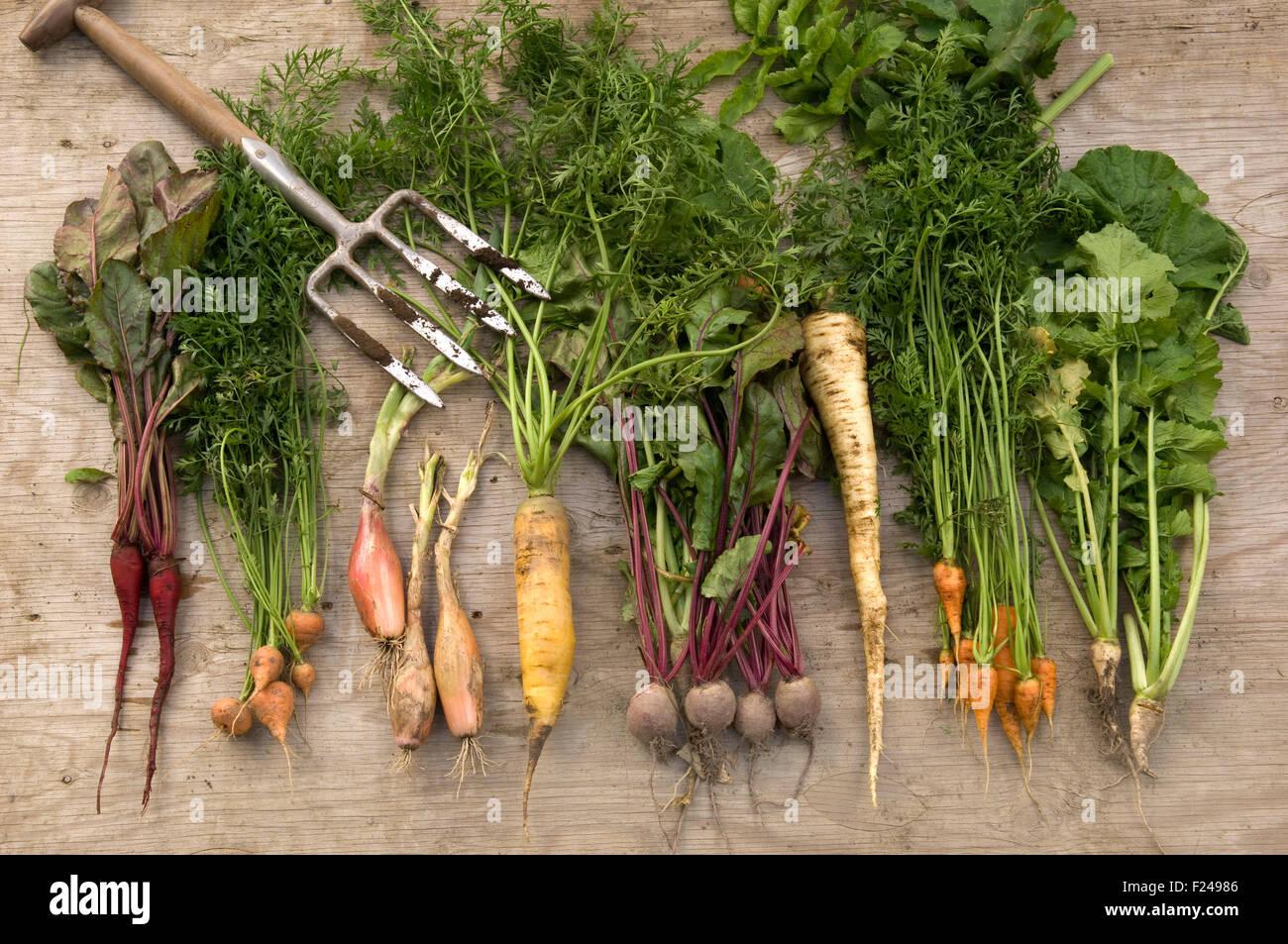 Une sélection de légumes racines Anglais y compris les ...