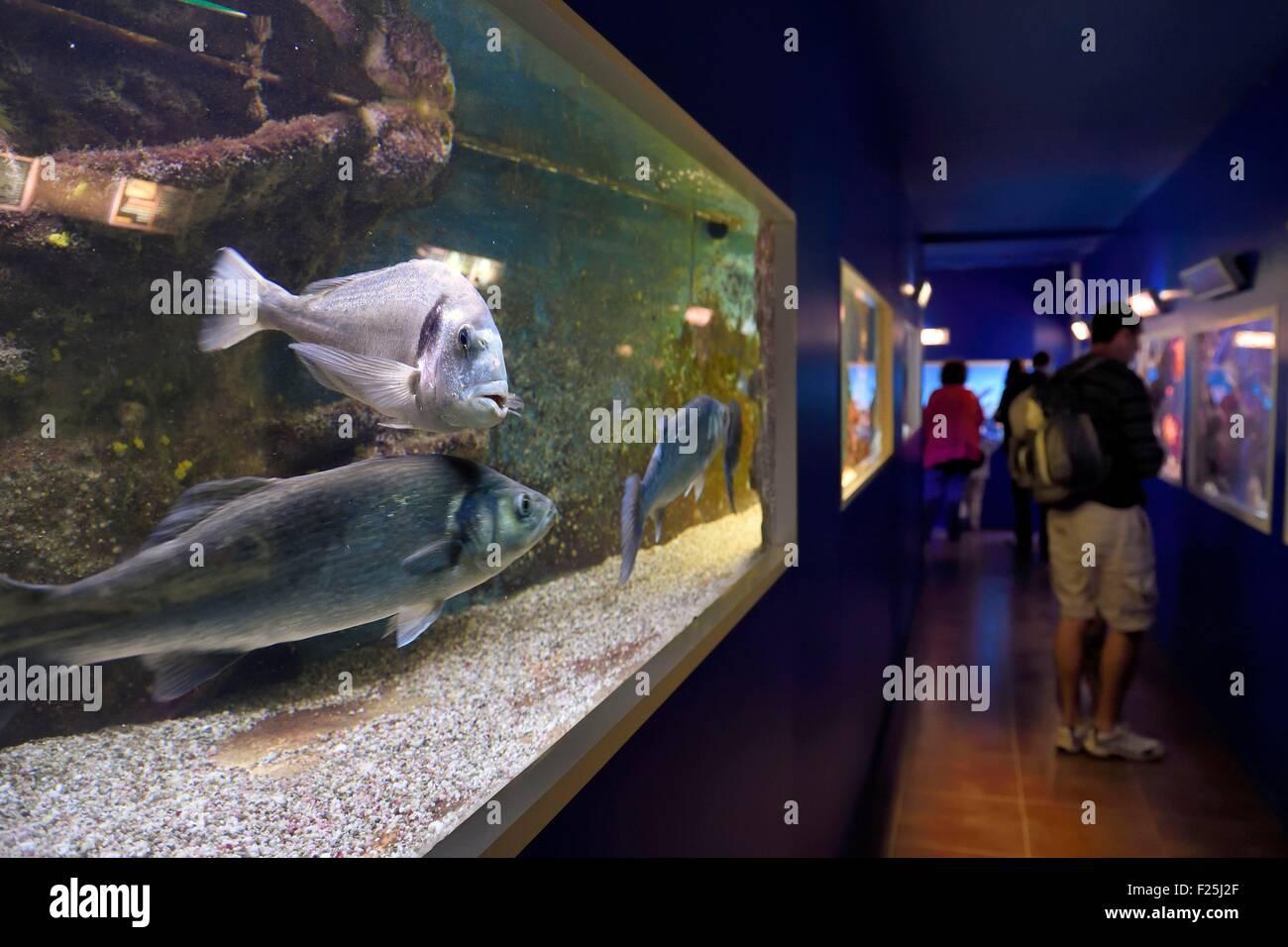 Ile des Embiez musée Océanographique