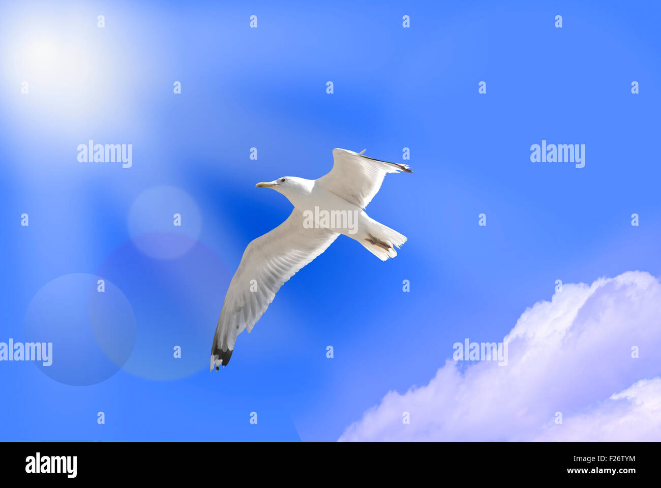 Oiseau de paradis on blue sky Photo Stock
