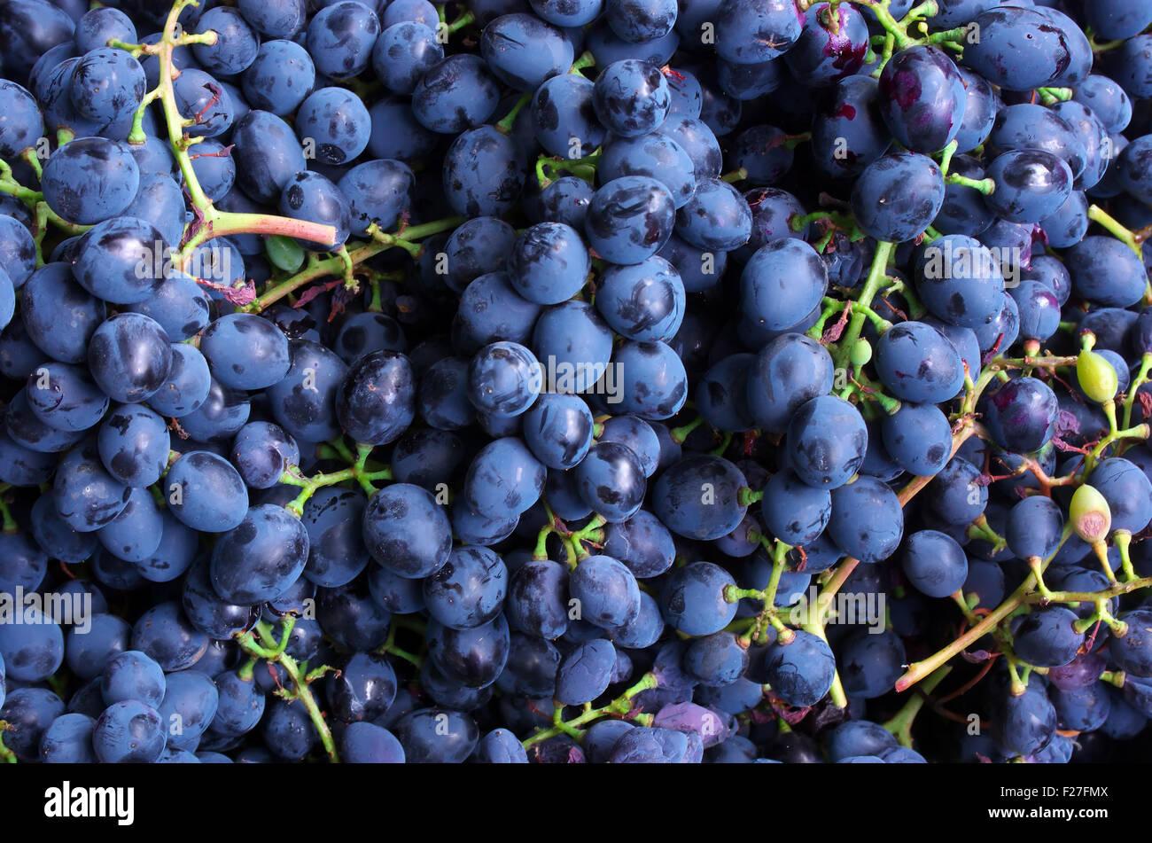 La texture du raisin. Élément de design. Photo Stock