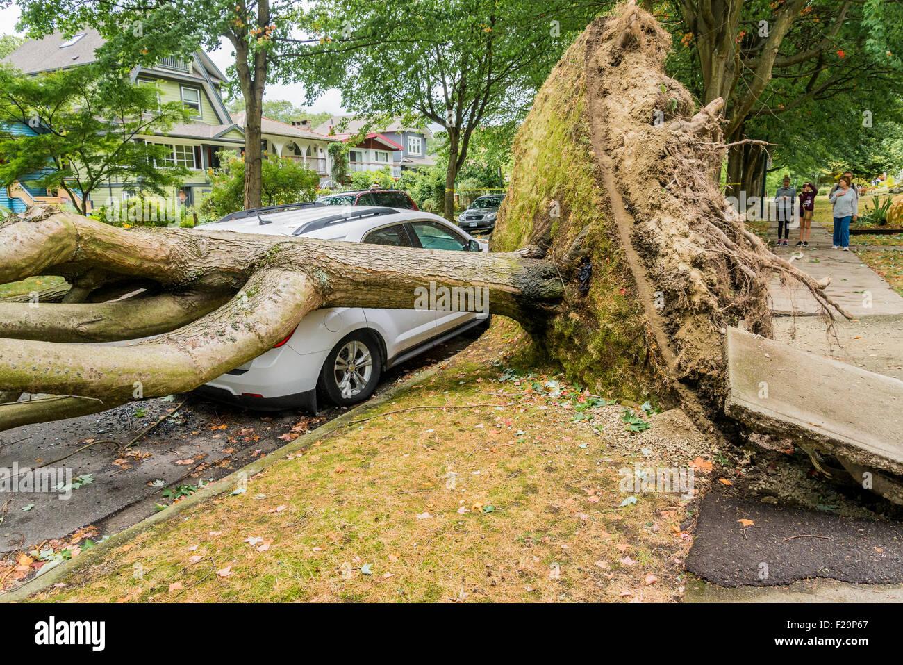 De puissants vents de tempête frapper au-dessus des arbres et causent des perturbations de l'alimentation, Photo Stock