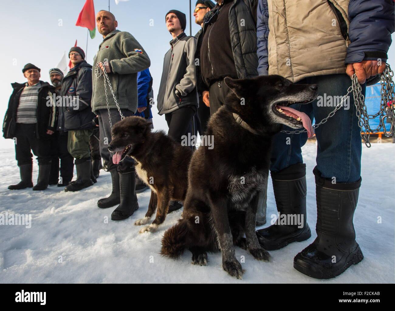 De l'Arctique. Le 11 août 2015. Les chiens du Groenland Fram et d'ombre vu comme explorateurs polaires du Pole Nord Banque D'Images