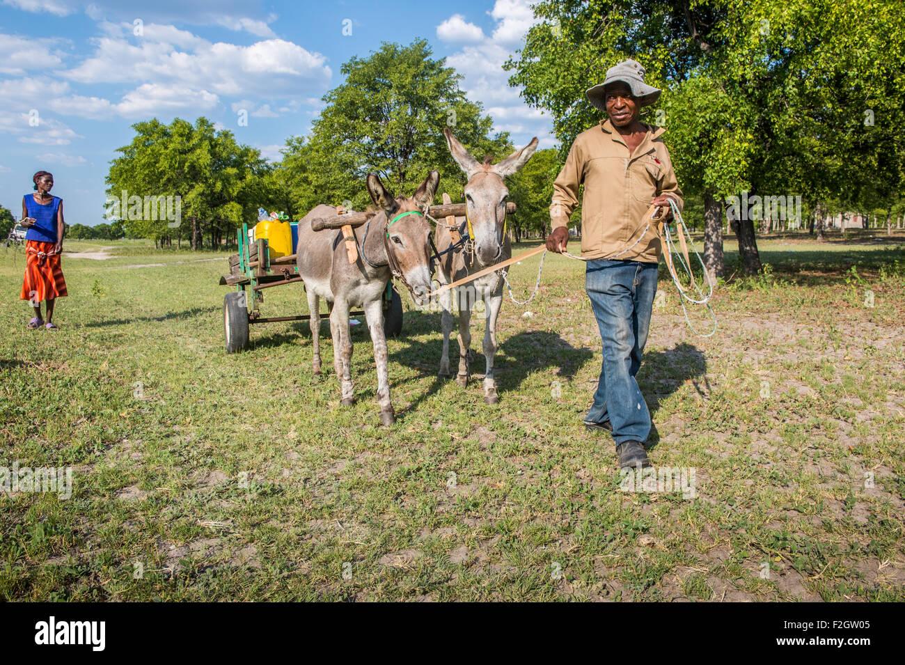 Les Africains avec des ânes tirant une charrette dans une zone rurale au Botswana, l'Afrique Photo Stock