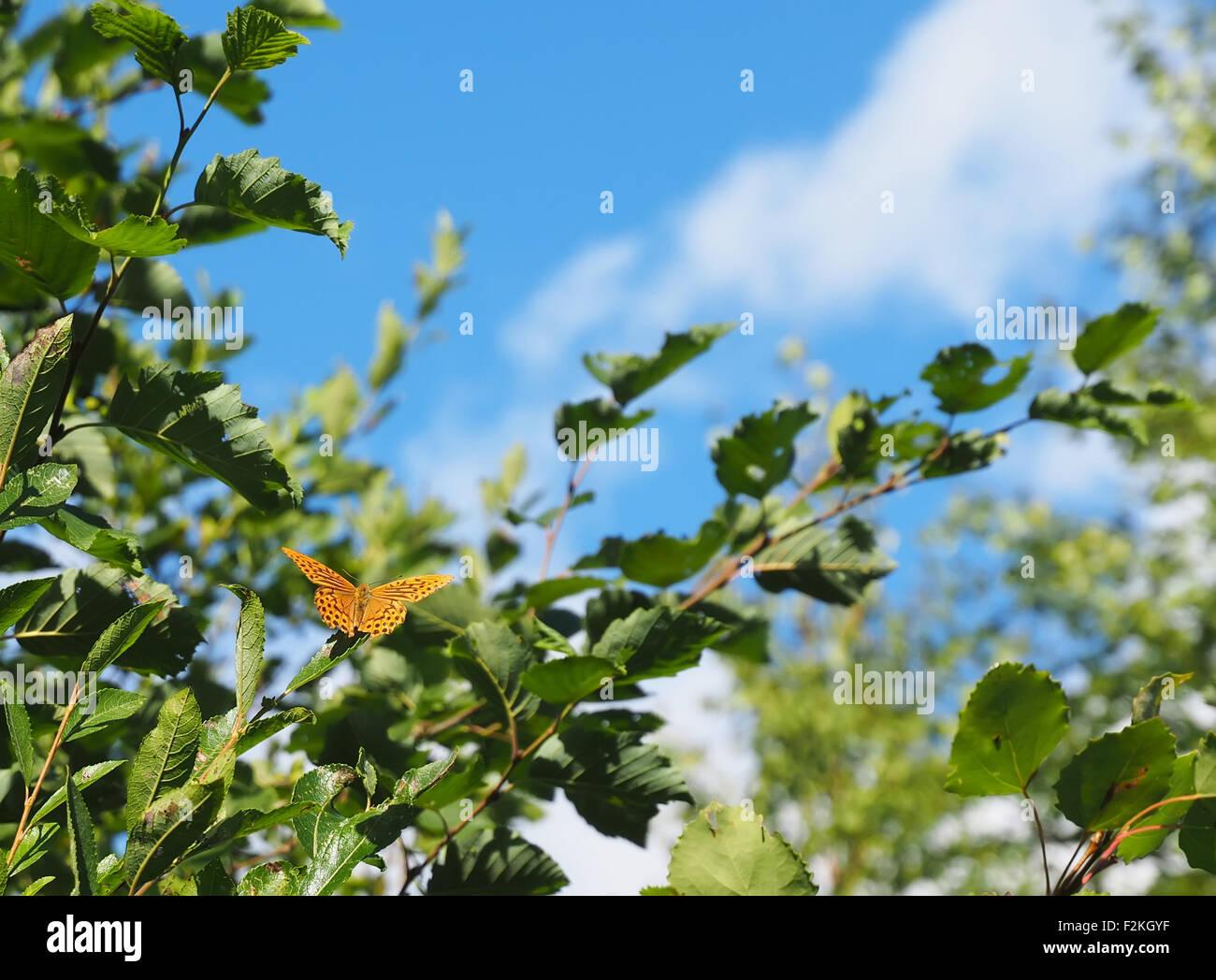Papillon de la forêt Banque D'Images