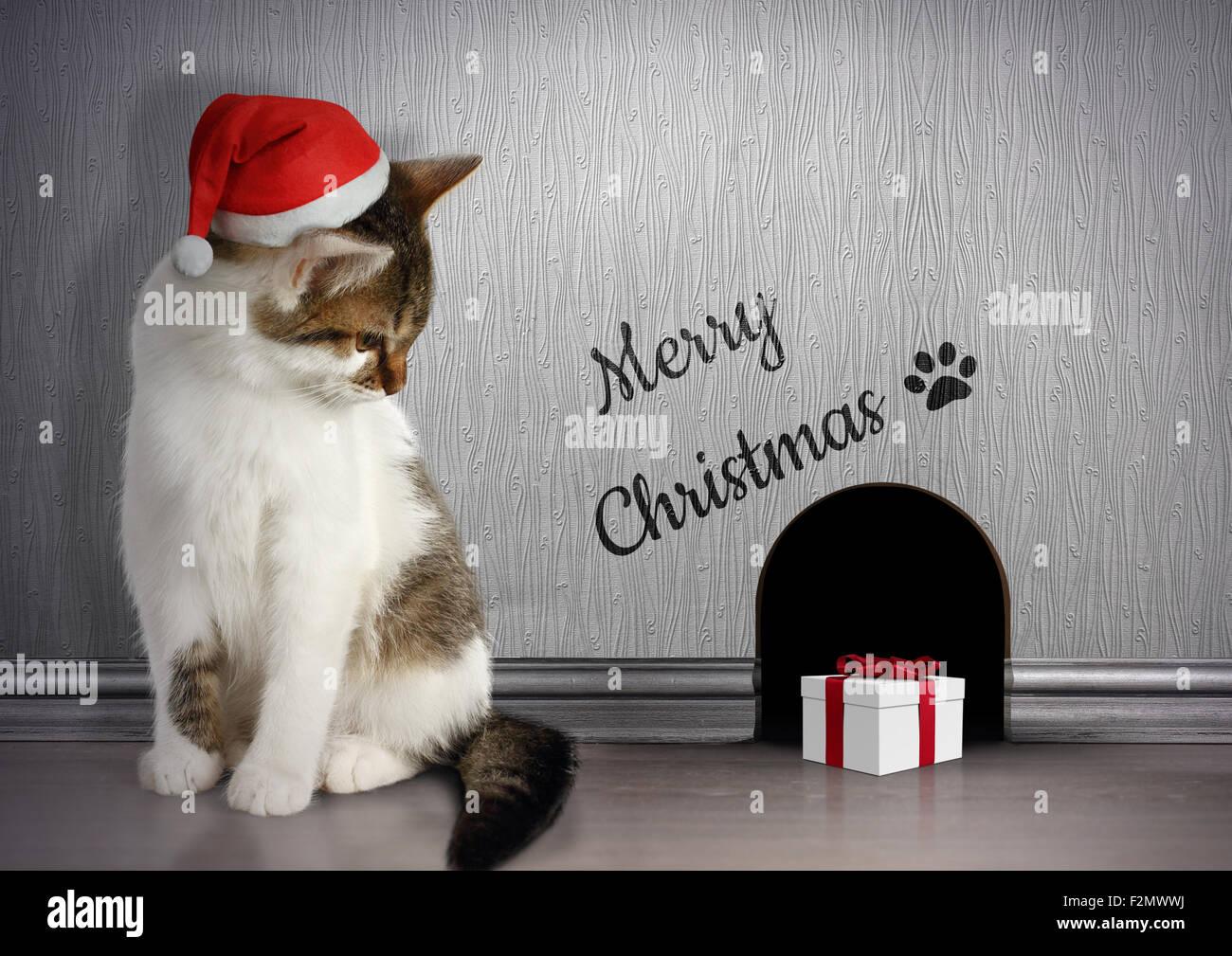 Femmes Noël tabby chats Santa Chapeau Chaussettes BN