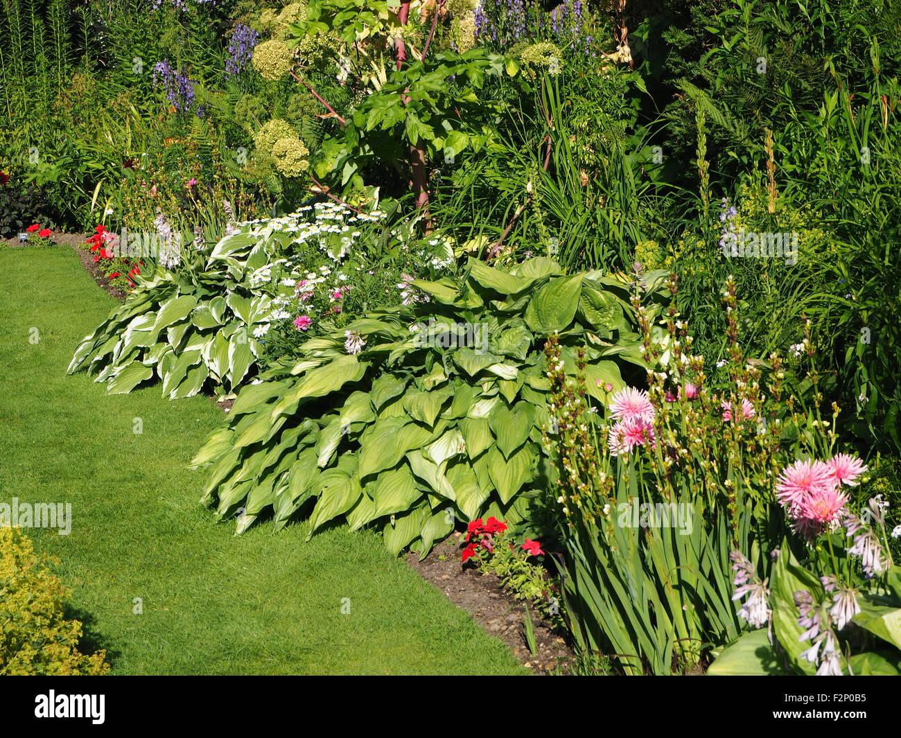 Belles Plantes En Bordure De Source Fraîche Chenies Manor Jardin En  Contrebas Au Début De Juin, Hostaas Et Dahlias, Roses, Verts, Varié.