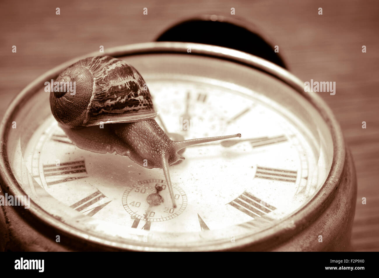 Un escargot sur une vieille horloge de bureau, en sépia Photo Stock