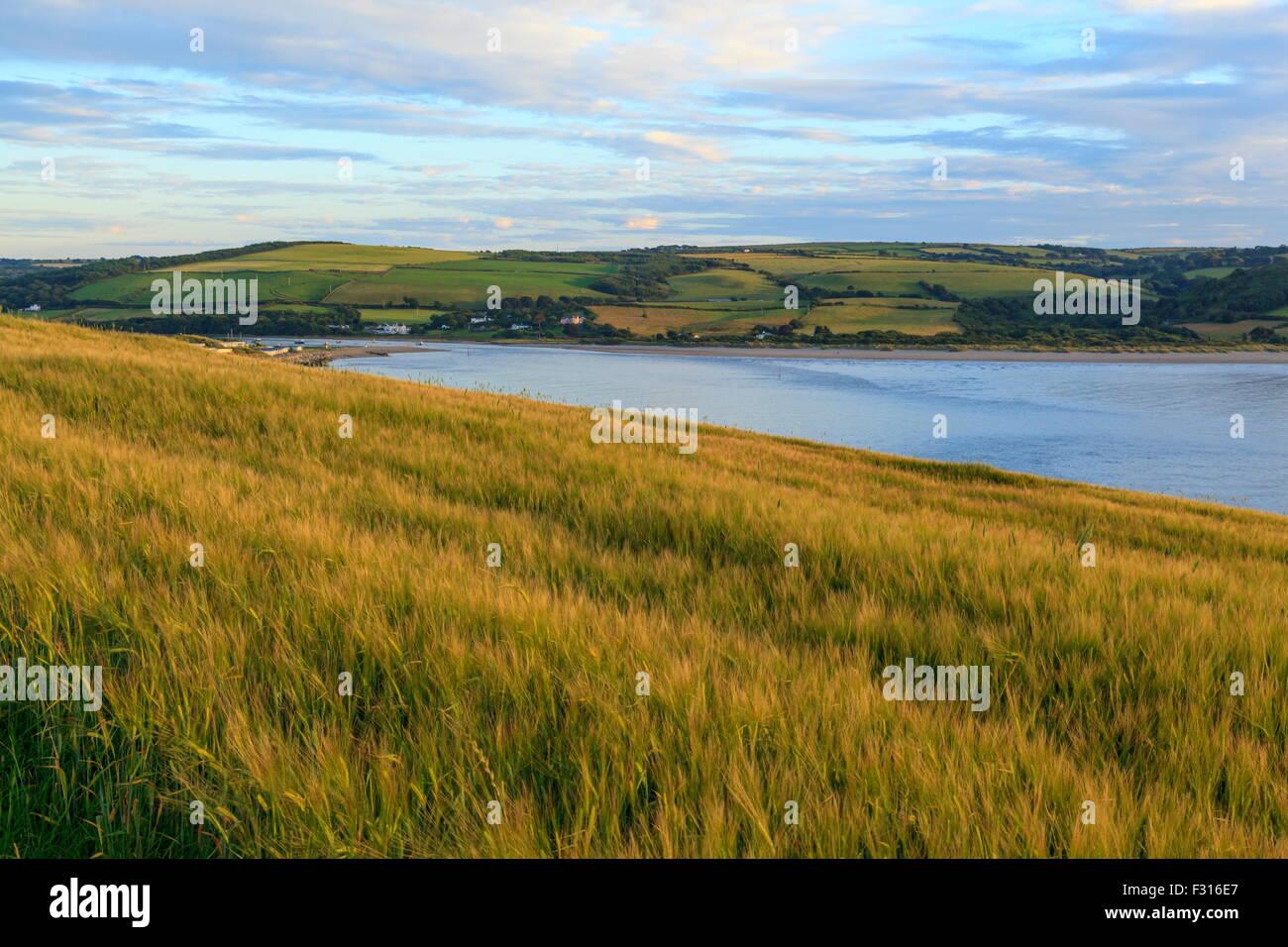 Poppit Sands et l'estuaire de Teifi est affiché dans un champ de blé Banque D'Images