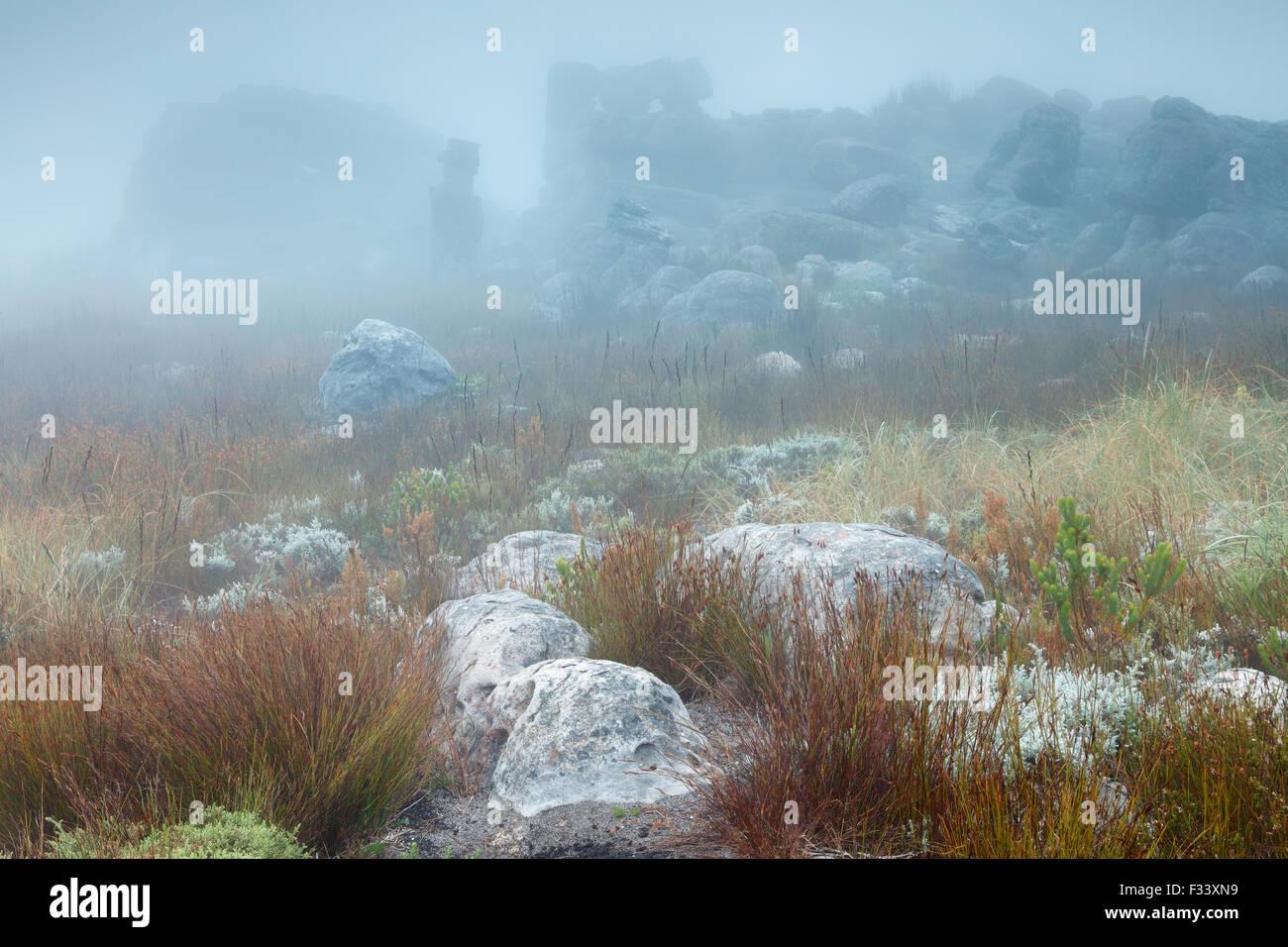 Montagnes Hottentots Holland, Western Cape, Afrique du Sud Photo Stock