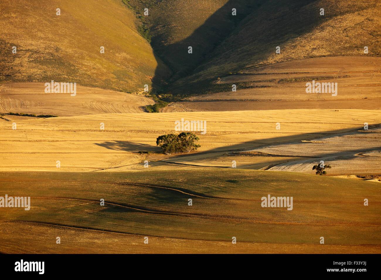 Terres agricoles vallonnées dans la région d'Overberg près de Villiersdorp, Western Cap, Afrique Photo Stock