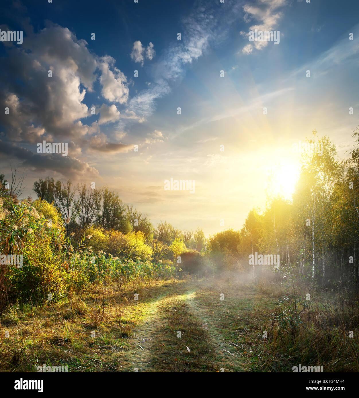 Du brouillard en bois de l'automne au lever du soleil Photo Stock