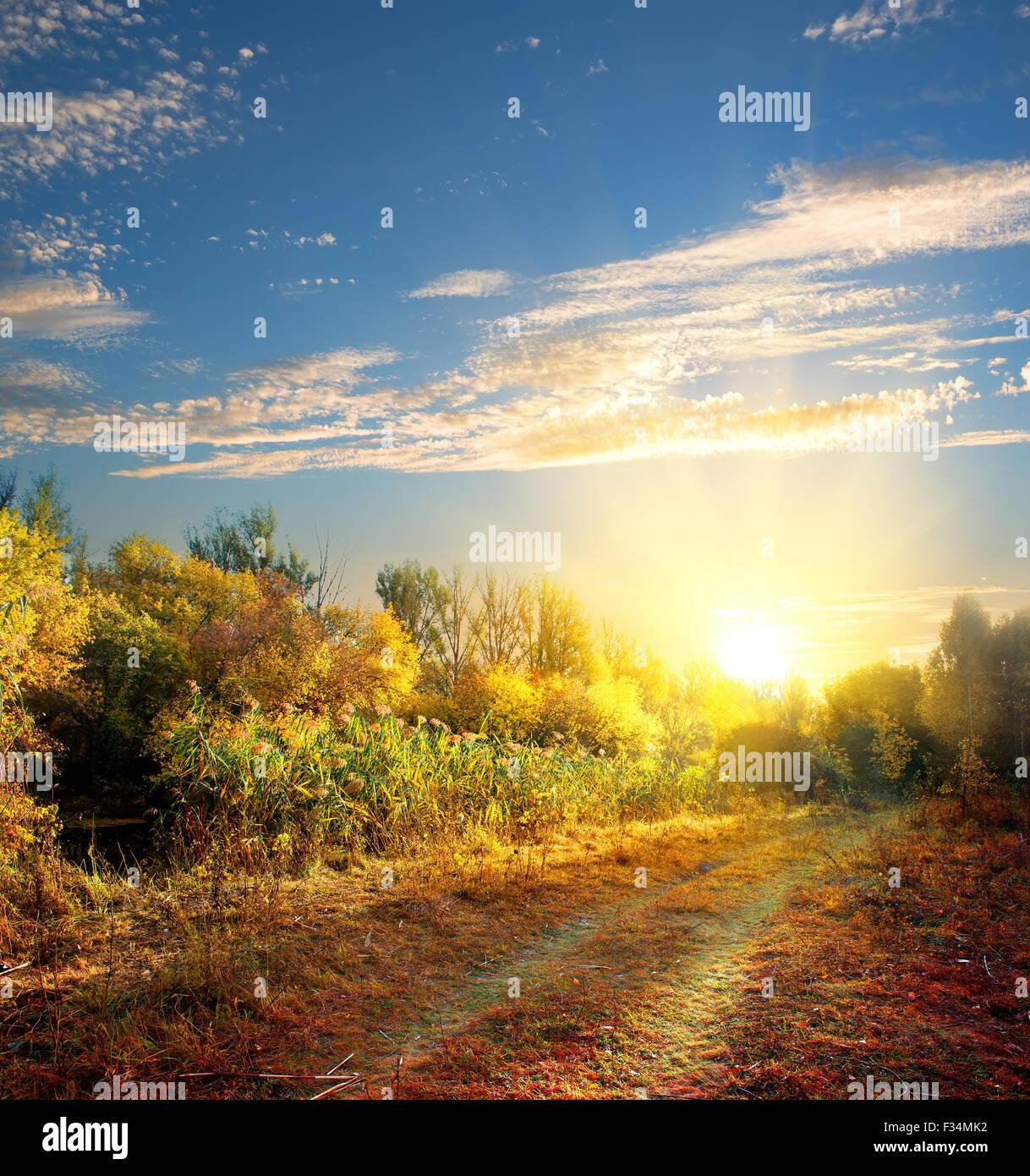 Route de campagne dans la forêt d'automne Photo Stock