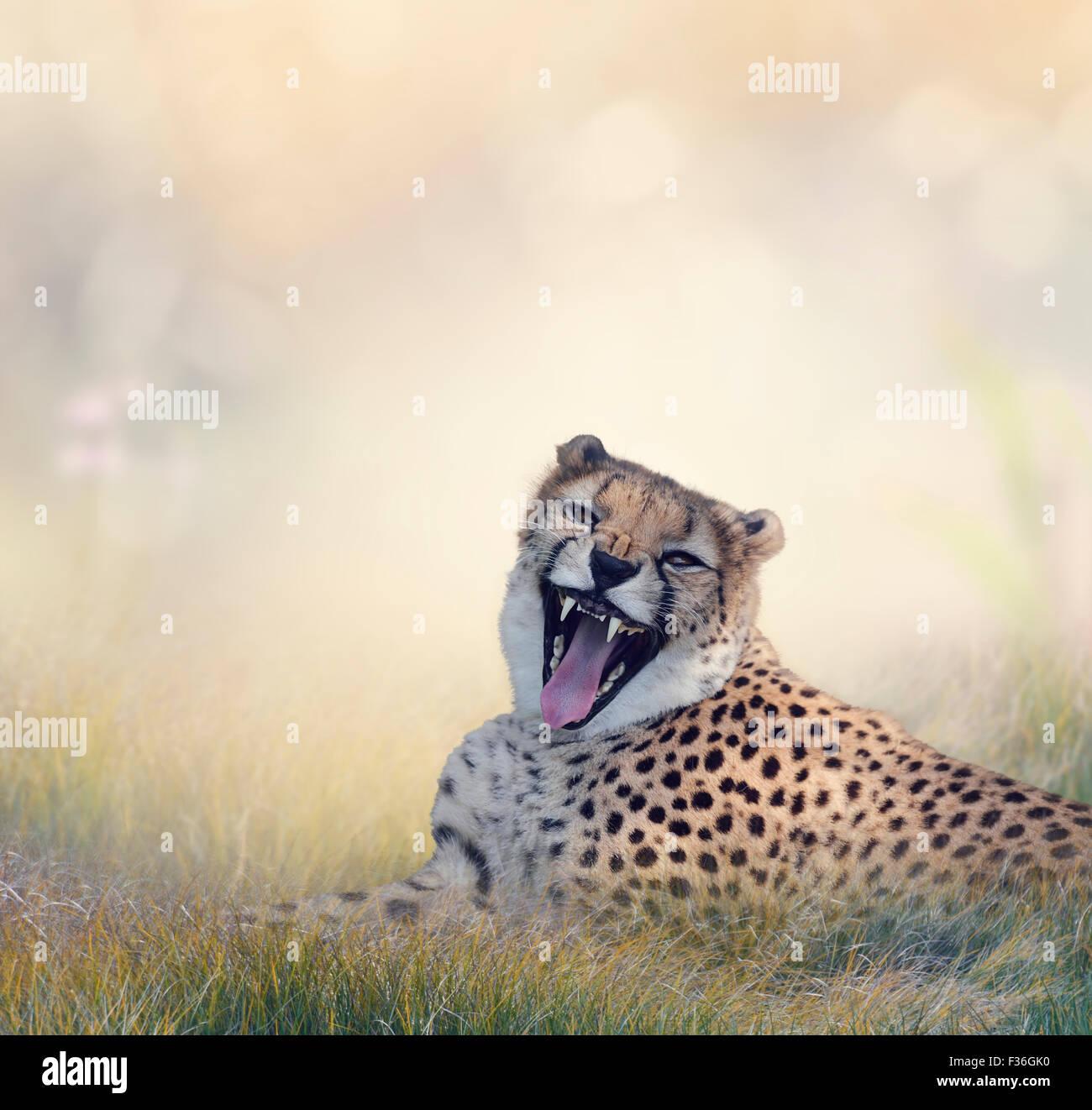 Le guépard se reposant sur l'herbe Photo Stock