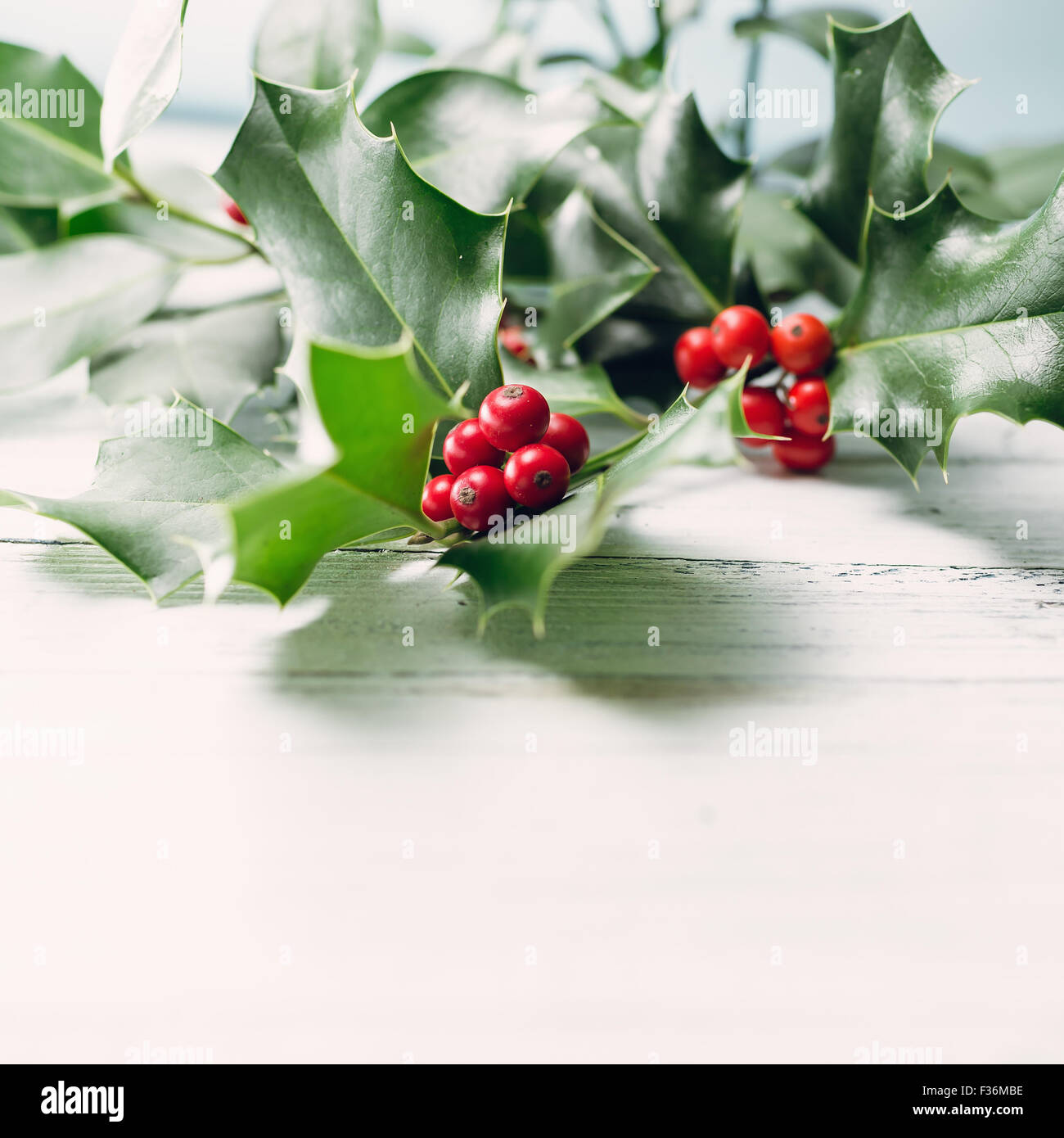 Le houx (Ilex aquifolium européenne) Feuilles et fruits Photo Stock